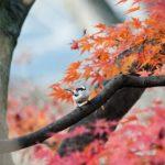 高台寺の紅葉!2018年の秋のライトアップ(夜間拝観)の期間と混雑状況