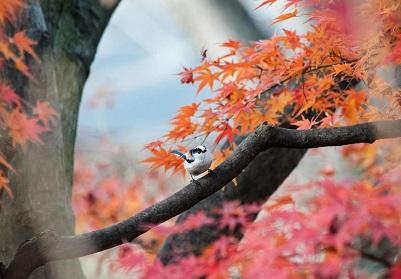 高円寺の紅葉