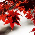 京都の紅葉の時期!2018年の見ごろは,いつからいつまで?