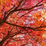 京都の紅葉!私が見惚れた人気の名所と人が少ない穴場10選【2017】