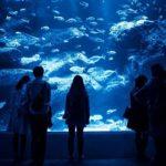 海遊館のイルミネーション2016~点灯の期間と時間をチェック~