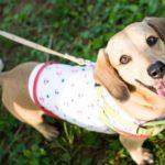 犬の夏バテの症状は下痢と嘔吐?暑い時期のワンコのケア2017