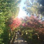 高台寺の紅葉の見頃は?昼間の色づきと混雑する時期はいつ?