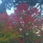 永観堂の紅葉の見頃とライトアップ情報!混雑とおすすめコース【2019】
