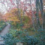 宝筐院の紅葉は混雑がなく穴場!見頃の時期や拝観時間を確認!2017