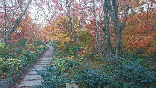 紅葉がある秋の宝筐院の廊下