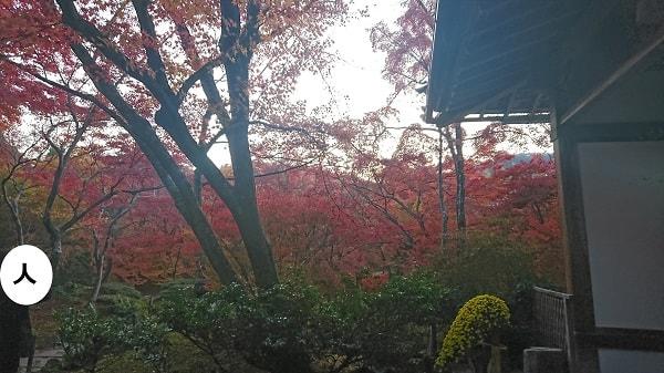 2017年の宝筐院の紅葉