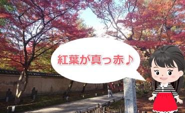 宝厳院の紅葉の写真