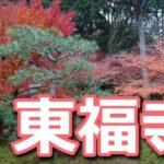 東福寺の紅葉は混雑ある?12月の混み具合と周り方のコツ【写真付き】