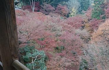 東福寺の渡り廊下の紅葉
