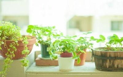 梅雨の時期に観葉植物